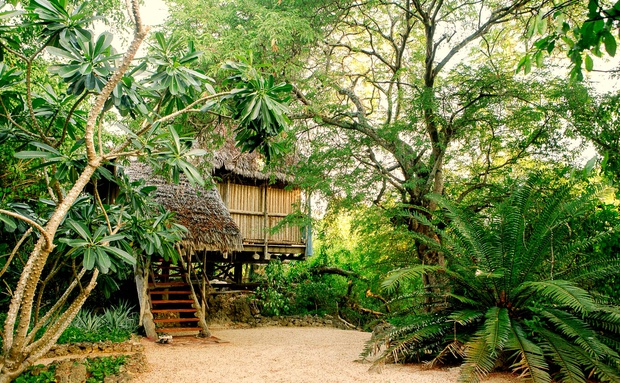 tree house island holiday