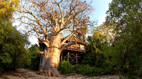 moja tree house island holiday